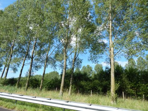 A tree-lined Dutch roadway
