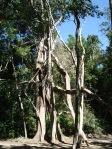 Unusual vegetation