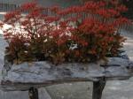 Plantings...