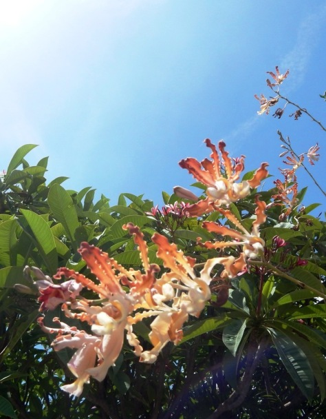 Beach Orchid