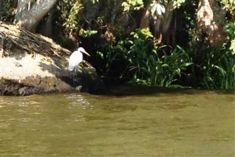 catemaco egret 2