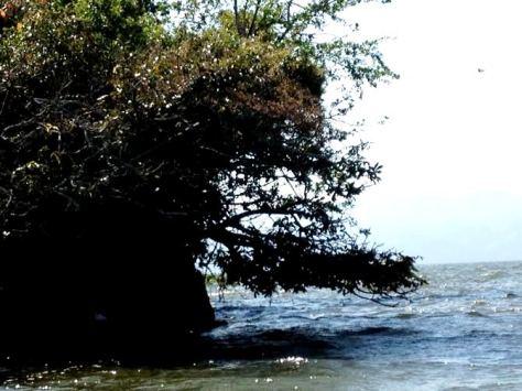 catemaco monkey island