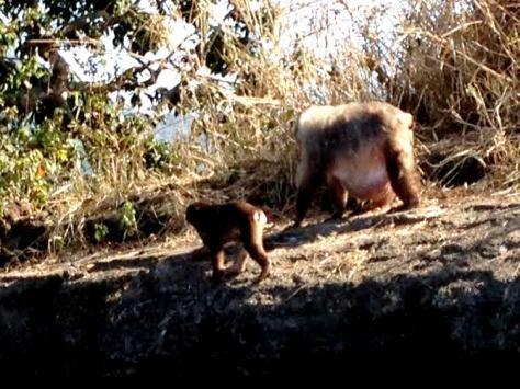 catemaco monkeys 2